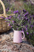 Posy of butterfly lavender