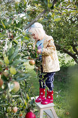Girl wearing wellington boots standing on ladder next to apple tree in garden