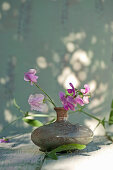 Everlasting sweet pea flowers in vase