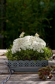 Arrangement of Queen Anne's lace in moss