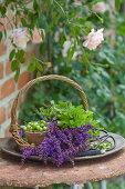 Basket of salvia flowers, oregano, unripe cherries, scissors and florists' wire