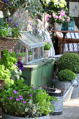 Herbs, shrubs and box balls in planters