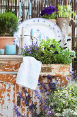 Shabby-chic terrace: cabinet drawer planted with violas and campanula