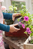 Removing bedding plants from plastic pots