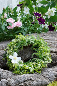 Wreath of privet blossoms, wild chamomile, Dogwood blossoms, and yarrow leaves