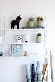 Potted cacti and succulents on wall-mounted shelves