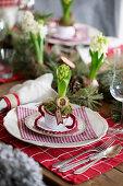 Hyazinthe in gehäkelter Suppentasse auf Weihnachtstisch
