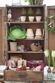 An old wooden cupboard with flower pots, cabbages and decorative utensils
