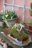 Ice skates made of moss and Christmas roses