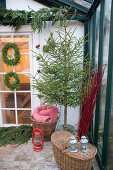 Christmas tree in zinc bucket surrounded by baskets in conservatory