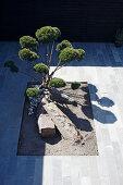 View down onto cloud-pruned bonsai in courtyard
