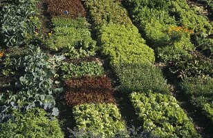 Salad and vegetable beds