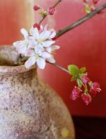 Apple blossom in a stone vase