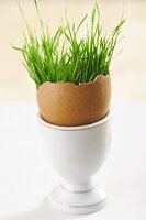 Grass in eggshell in eggcup