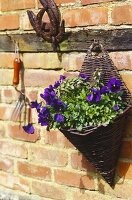 Woven wooden hanging basket filled with purple flowers and greenery