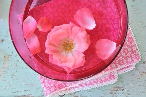 A pink rose in a pink bowl