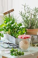 A ball of string in a jam jar with a hole in the lid in front of a tray of potted herbs