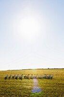 Free range geese, Hessische Staatsdomäne Frankenhausen