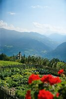 A view of the surrounding countryside from a summery farm garden, Oberhauserhof, South Tyrol