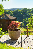 Bonsai tree in stone pot on wooden deck with view of landscape in background