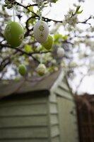 Decorative eggs hanging on flowering twigs in garden