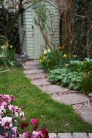 Flowering pansies by garden path
