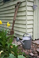 Daffodils and watering can next to shed
