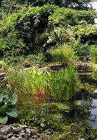Natural-looking pond with bridge in summer garden
