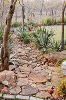 Garden path made of stone and boulders with blooming aloes