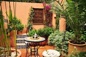 Potted plants on terrace (Morocco)