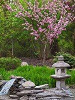 Blühender Zierapfelbaum im japanischen Garten
