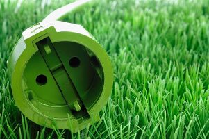 Green plug in grass