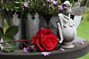 Red rose with fairy figurine and zinc vases