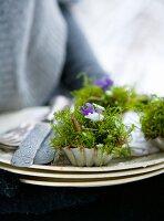 Arrangements of moss and violets in vintage tartlet tins