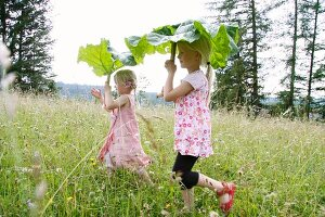 Two little blond girls using rhubarb leaves as sun umbrellas in the garden