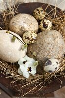 Small and large birds' eggs with pansies in a straw nest