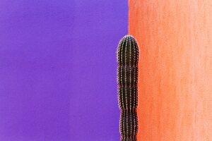 Cactus Against Contrasting Walls