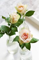 Three salmon-pink roses in bottles