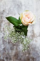 A rose and gypsophila