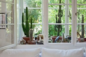 Cacti collection between panes of double windows