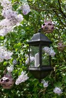 Candle lantern in garden amongst flowering lilac