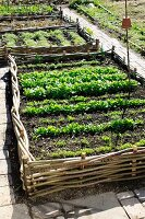 Small vegetable bed borderd with wicker on a paved terrace