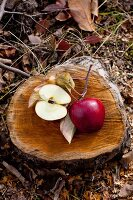 Apples on a slice of tree trunk