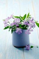 A bouquet of blooming vincas (Vinca minor) in a vase