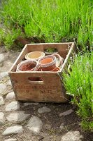 Empty flower pots in wooden crate in garden