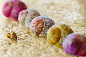 Brightly painted snail shells on sandstone wall