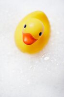 Yellow rubber duck in bubble bath