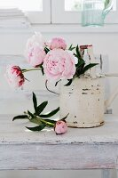 Pink peonies in white, vintage-effect watering can on white-painted table top