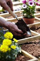 Square foot gardening (flower bed divided into squares)