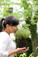 Woman sniffing a thyme plant in garden